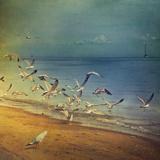 Seagulls Flying Reproduction photographique par Istvan Kadar Photography