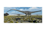 A Herd of Giant Diplodocus Dinosaurs on the Move Poster