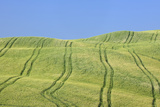 Tire Tracks in Wheat Field, Val D'orcia, Siena Province, Tuscany, Italy Photographic Print by Martin Ruegner