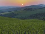 Vineyards, Chianti Region, Tuscany, Italy Photographic Print by Ken Welsh