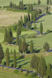 Winding Road Lined with Cypress Trees, Monticchiello, Siena Province, Tuscany, Italy Photographic Print by Martin Ruegner