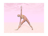 Female Musculature Performing Triangle Yoga Pose Posters