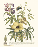 Ketmia, Iris and Alsine Giclée-tryk af Georg Dionysius Ehret