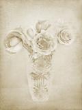 Soft Roses II Giclee Print by Shana Rae