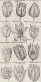 Tulip Cultivars Affiches par  The Vintage Collection