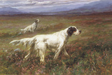 Setters on the Moors Gicléetryck av Maud Earl