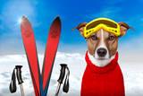 Winter Dog Snow Reproduction photographique par Javier Brosch