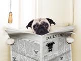 Dog Toilet Fotografie-Druck von Javier Brosch