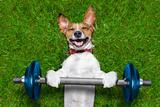 Fitness Dog Reproduction photographique par Javier Brosch