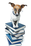 Dog Book Stack Reproduction photographique par Javier Brosch