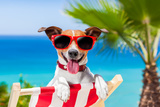 Summer Vacation Dog Reproduction photographique par Javier Brosch