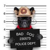 Mexican Mugshot Dog Valokuvavedos tekijänä Javier Brosch