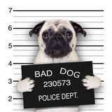 Mugshot Dog Reproduction photographique par Javier Brosch