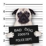 Mugshot Dog Valokuvavedos tekijänä Javier Brosch
