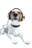Dog Listening to Music Reproduction photographique par Javier Brosch