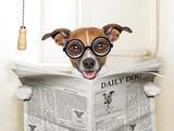 Dog Toilet Valokuvavedos tekijänä Javier Brosch