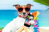 Summer Selfie Dog Reproduction photographique par Javier Brosch
