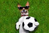 Funny German Soccer Dog Valokuvavedos tekijänä Javier Brosch