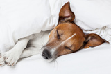 Dog in Bed Reproduction photographique par Javier Brosch