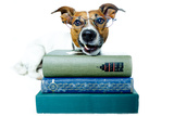 Dog and Books Reproduction photographique par Javier Brosch