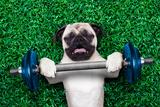 Sport Dog Reproduction photographique par Javier Brosch