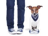 Dog Owner and Dog Valokuvavedos tekijänä Javier Brosch
