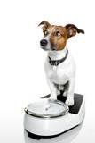 Dog Scale Valokuvavedos tekijänä Javier Brosch