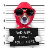 Mugshot Lady Dog Valokuvavedos tekijänä Javier Brosch