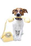 Dog on the Phone Valokuvavedos tekijänä Javier Brosch