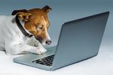 Dog Computer Valokuvavedos tekijänä Javier Brosch