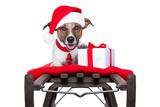 Christmas Dog on Sleigh Valokuvavedos tekijänä Javier Brosch