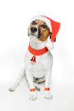 Christmas Dog Santa Valokuvavedos tekijänä Javier Brosch