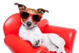 Dog Couch or Sofa Valokuvavedos tekijänä Javier Brosch