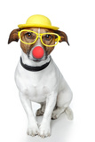 Funny Dog Nose Hat Glasses Reproduction photographique par Javier Brosch