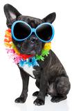 Holiday Summer Dog Valokuvavedos tekijänä Javier Brosch
