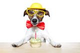 Birthday Dog Cupcake Valokuvavedos tekijänä Javier Brosch