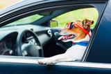 Dog Car Steering Wheel Valokuvavedos tekijänä Javier Brosch