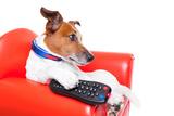 Dog Tv Valokuvavedos tekijänä Javier Brosch
