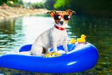 Summer Beach Dog Valokuvavedos tekijänä Javier Brosch