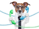 Business Dog Reproduction photographique par Javier Brosch
