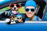 Dog Car Window Valokuvavedos tekijänä Javier Brosch