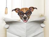 Dog Toilet Reproduction photographique par Javier Brosch