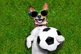 Funny Brazil Soccer Dog Photographic Print by Javier Brosch