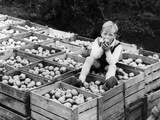 Apple Eater Reproduction photographique par Harry Shepherd