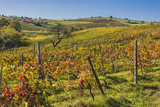 Landscape and Vineyards Photographic Print by  Maremagnum