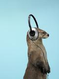 Sea Otter Listening to Headphones Fotografie-Druck von Andy Reynolds