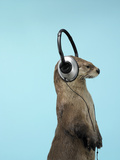 Sea Otter Listening to Headphones Photographic Print by Andy Reynolds