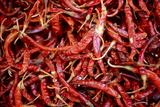 Red Chili Peppers (Ocotlan Market, Oaxaca, Mexico) Fotografisk tryk af Marco Cristofori