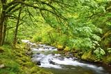 Tanner Creek, Columbia River Gorge National Scenic Area, Oregon, Pacific Northwest Fotografisk trykk av Craig Tuttle