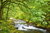 Tanner Creek, Columbia River Gorge National Scenic Area, Oregon, Pacific Northwest Photographic Print by Craig Tuttle